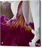 Orchid Ruffle Acrylic Print
