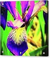 Orchid Acrylic Print