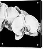 Orchid - Bw Acrylic Print