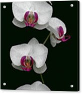 Orchid Sequence  Acrylic Print