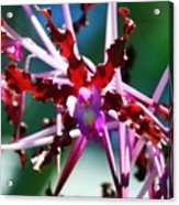 Orchid Spider Acrylic Print
