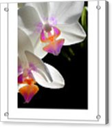 Orchid Spring Poster Acrylic Print