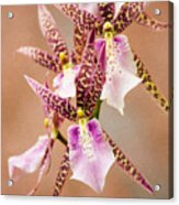 Orchid Stars Acrylic Print