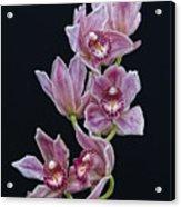 Orchid Study 1 Acrylic Print