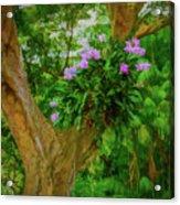 Orchid Tree Acrylic Print