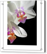 Orchid Underneath Poster Acrylic Print