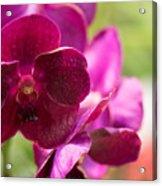 Orchid Vanda Ratchaburi Waxy Red Acrylic Print