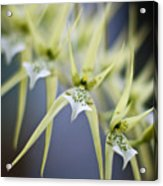 Orchid Wave Acrylic Print