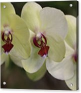 Orchid White Trio Acrylic Print
