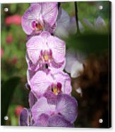 Orchid Wonders Acrylic Print