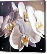 Orchidee Acrylic Print