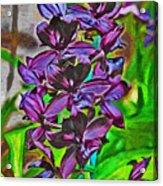 Orchids 1714 Acrylic Print