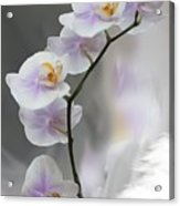 Orchids 2010 Acrylic Print