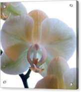 Orchids 3 Acrylic Print by Mike McGlothlen