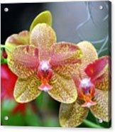 Orchids 35 Acrylic Print