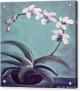 Orchids 5 Acrylic Print