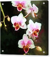 Orchids Abound Acrylic Print