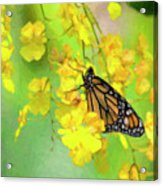 Orchids And Butterfly Painting Acrylic Print