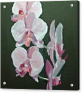 Orchids For Didi Acrylic Print