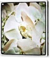 Orchids For His Majesty. In Loving Acrylic Print