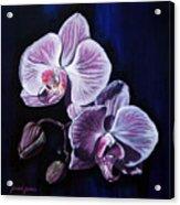 Orchids II Acrylic Print