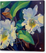 Orchids In A Blue Pot Acrylic Print