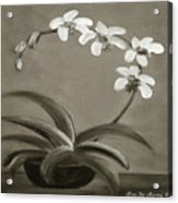 Orchids In Black And White Acrylic Print
