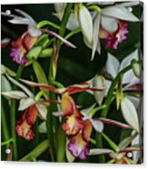 Orchids In Bloom Acrylic Print