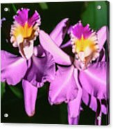 Orchids In Costa Rica Acrylic Print