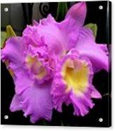 Orchids In Fuchsia  Acrylic Print