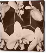 Orchids In Sepia Acrylic Print