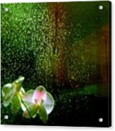 Orchids In The Rain Acrylic Print
