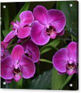 Orchids In Vivid Pink  Acrylic Print