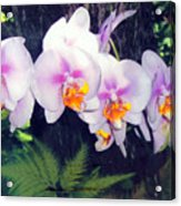 Orchids Of Hawaii Acrylic Print