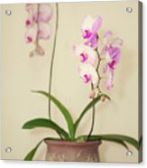 Orchids On Sideboard Acrylic Print