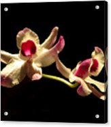 Orchids Only Acrylic Print