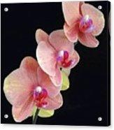 Orchids Reach For The Rainbow Acrylic Print