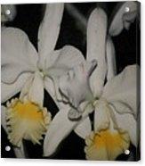 Orchids Satin Acrylic Print