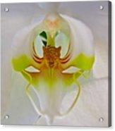 Orchids Secret Acrylic Print