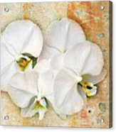 Orchids Upon The Rough Acrylic Print