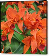 Orchids Vertical Triptych Acrylic Print