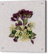 Oregano Florets And Leaves Pressed Flower Design Acrylic Print