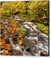 Oregon Autumn Beauty Acrylic Print