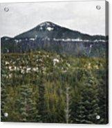 Oregon Cascade Range Forest Acrylic Print