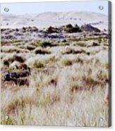 Oregon Dunes 6 Acrylic Print