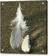 Oregon Feather Acrylic Print