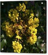 Oregon Grape Flowers Acrylic Print