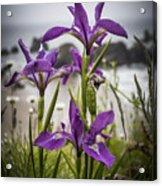 Oregon Iris At The Beach Acrylic Print