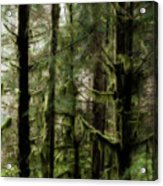Oregon Old Growth Coastal Forest Acrylic Print