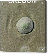Oregon Sand Dollar Acrylic Print